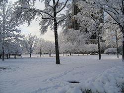 Winter Antifreeze 1