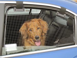 doggie-window-guard