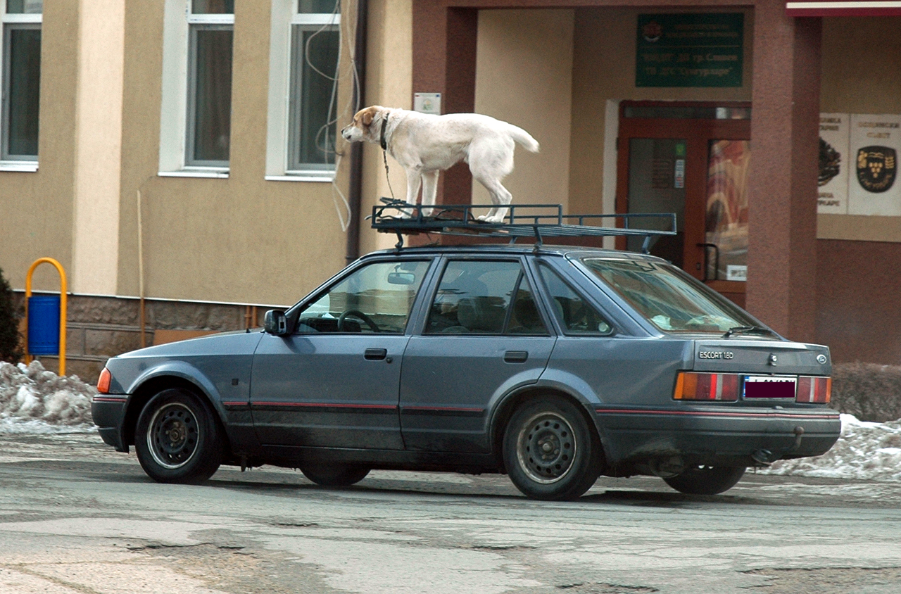 Weird State Laws - Dog On Roof Rack 1