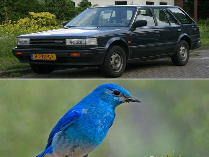 #16. Nissan Bluebird